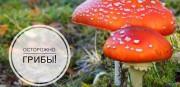 О первых признаках отравления грибами и чем опасна поганка?